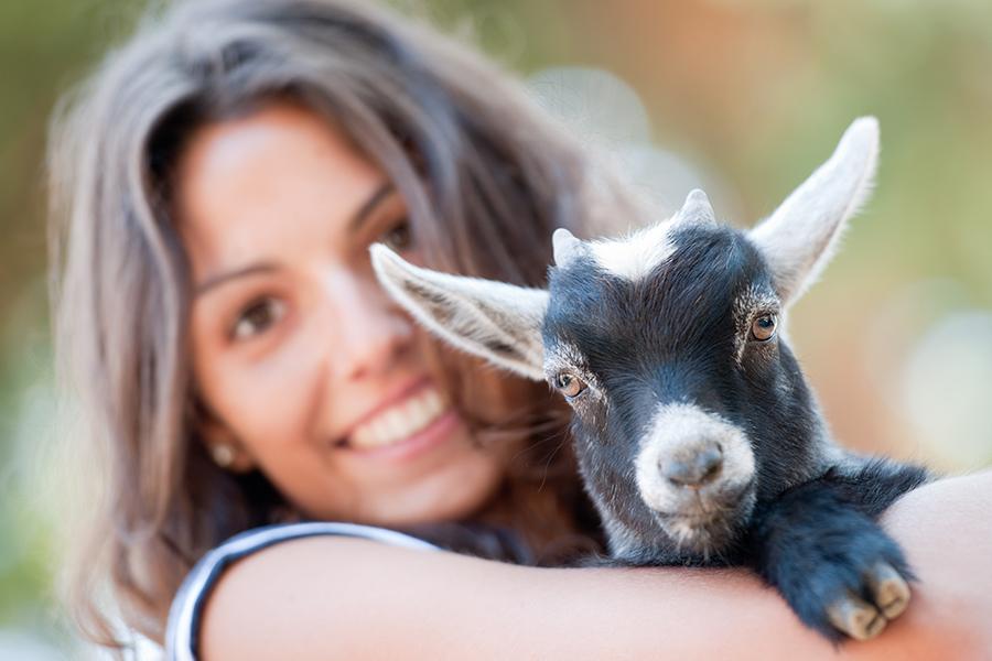 Goat Yoga with YoGoat LA
